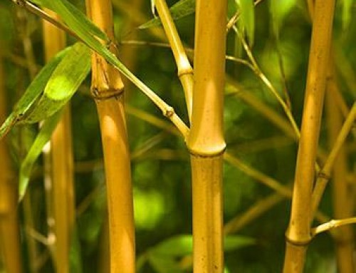 Is Bamboo Truly Eco-Friendly?